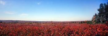 Dolly Sods Panorama