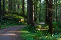 The Redwood Road