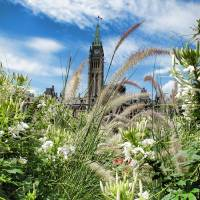 Ornamental Grasses & White Flowers, Peace Tower Art Prints & Posters by Chantal PhotoPix