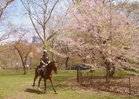 Mounted police Central Park