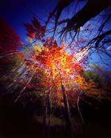Fall Forest Through a Pinhole