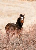 To be a Wild Horse