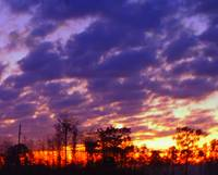 sunset, florida, sky, forest, prairie