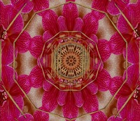 The Sacred Orchid Mandala