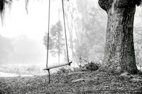Coosaw Tree Swing