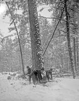 5146-michigan-logging-3-1880to1900