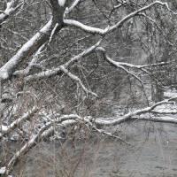 Snow Art Prints & Posters by Jennifer Harrison
