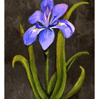 Louisiana Blue Iris Art Prints & Posters by Elaine Hodges
