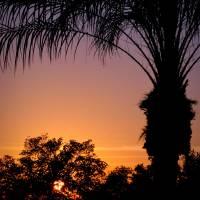 Florida Palm by Jen Wheeler
