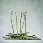 a bunch of asparagus Posters
