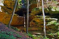 Wooded Ravine in Hocking Hills