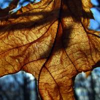 leaf 6 by Laura Troy