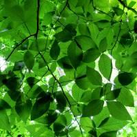 leaf 1 by Laura Troy