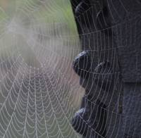 Spider Web in the Early Morning Dew