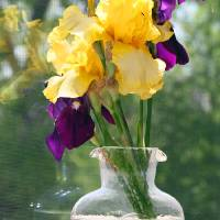 Irises in Glass Vase by Karen Adams