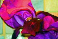 Abstract Purple Irises