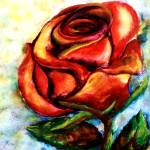 Rose 1 by Kris Courtney