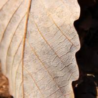 leaf by Laura Troy
