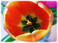 Eye of the Tulip by Giorgetta Bell McRee