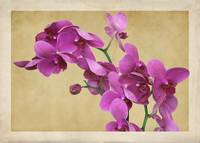Orchid Dream by Giorgetta Bell McRee