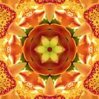 """""""Orange Orchid Mandala"""" by SeaAngel12"""