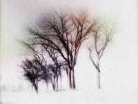 winter trees two