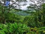 Hawaiian Rain Forest
