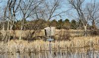 Wood duck house in the water