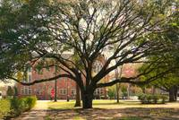 Old tree on Alabama campus