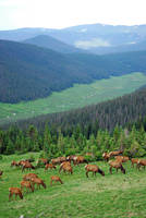 Elk Highlands