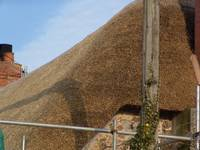 Thatching Whitehall 27
