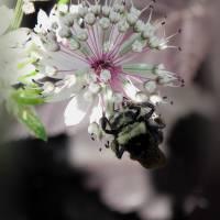 *Bee-Dazzle by Patricia Schnepf