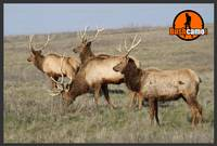 Elk Herd - Bush Camo