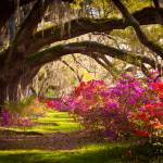 Charleston SC Magnolia Plantation Gardens - Memory