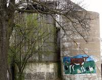 Calf portrait adorns an old silo