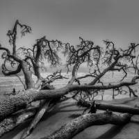 Fallen Tree on Beach | Black and White Landscape by Jim Crotty