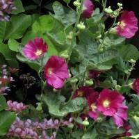 *Garden Flowers by Patricia Schnepf