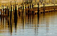 Reflections at the Ocean Pier