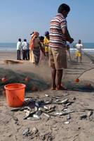 Fishermen Sorting the Catch Arambol