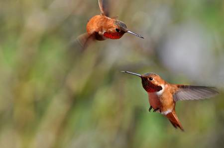 Fighting Hummers