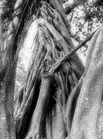 Banyan by Wendy Ritch