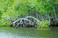 Loxahatchee River II by Wendy Ritch