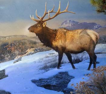 Sunset On The Ridge Bull Elk By R Christopher Vest