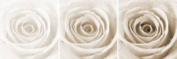 Sepia Rose with Water Droplets Triptych