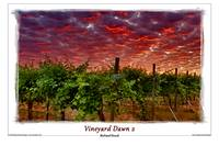Vineyard Dawn 2