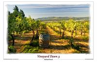 Vineyard Dawn 3
