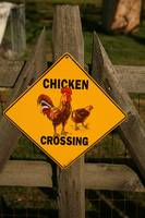 Shirley Plantation Chicken Crossing Sign