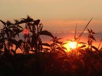 Nettle Sunset