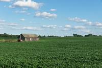 Soybeans and Shed