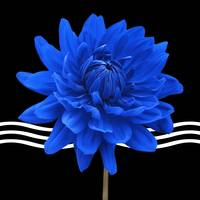 Blue Flower Triptych Canvas 2